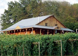 Cameo Vineyard